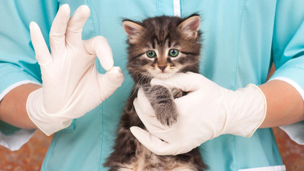 Autorizzazioni Sanitarie per strutture veterinarie